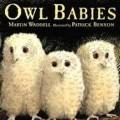 owl babies_thumb