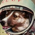 spacedog2.