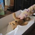 play the story bear hibernates